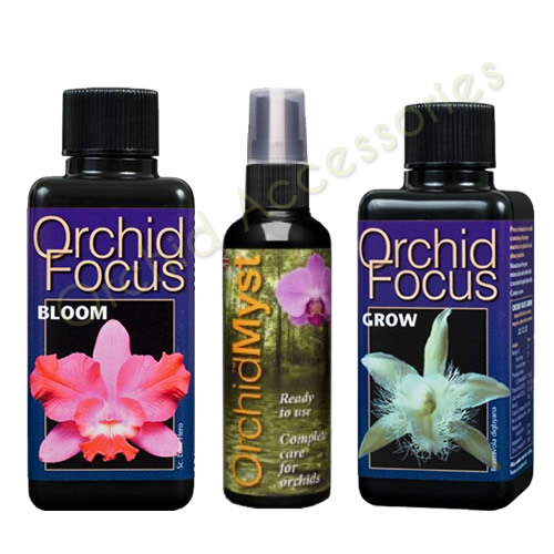 Orchid Focus 3 Pack